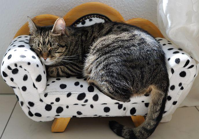 Afslappet kat. Når du er stresset har du brug for ro og hvile
